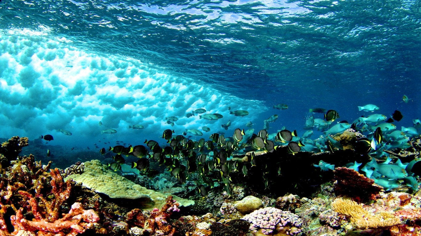 How Do Coral Reefs Provide Nitrogen To Marine Food Chains