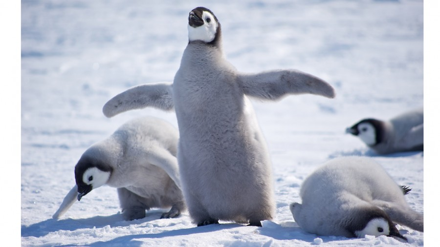 Petition: Shut down penguin facility in Puero Eten and ...