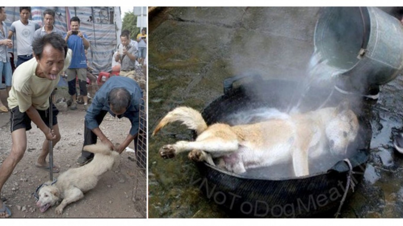 Chinese dog eating festival starts in 3 weeks! Take Action Now!