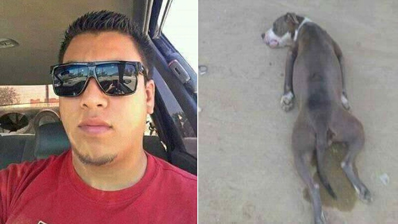 Punish coward that beat pit bull mother dog with baseball bat!