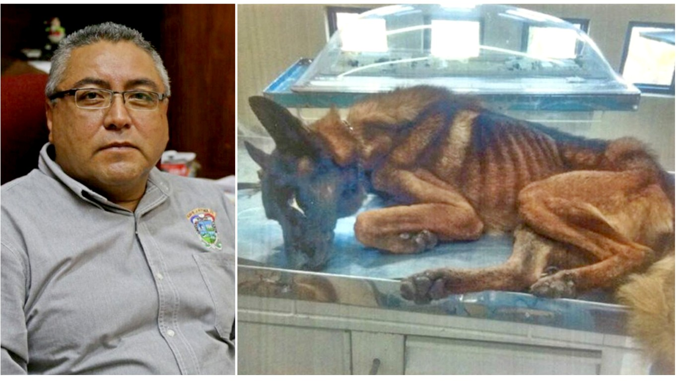 Punish city treasurer who left all police dogs to starve because feeding them would cost too much!