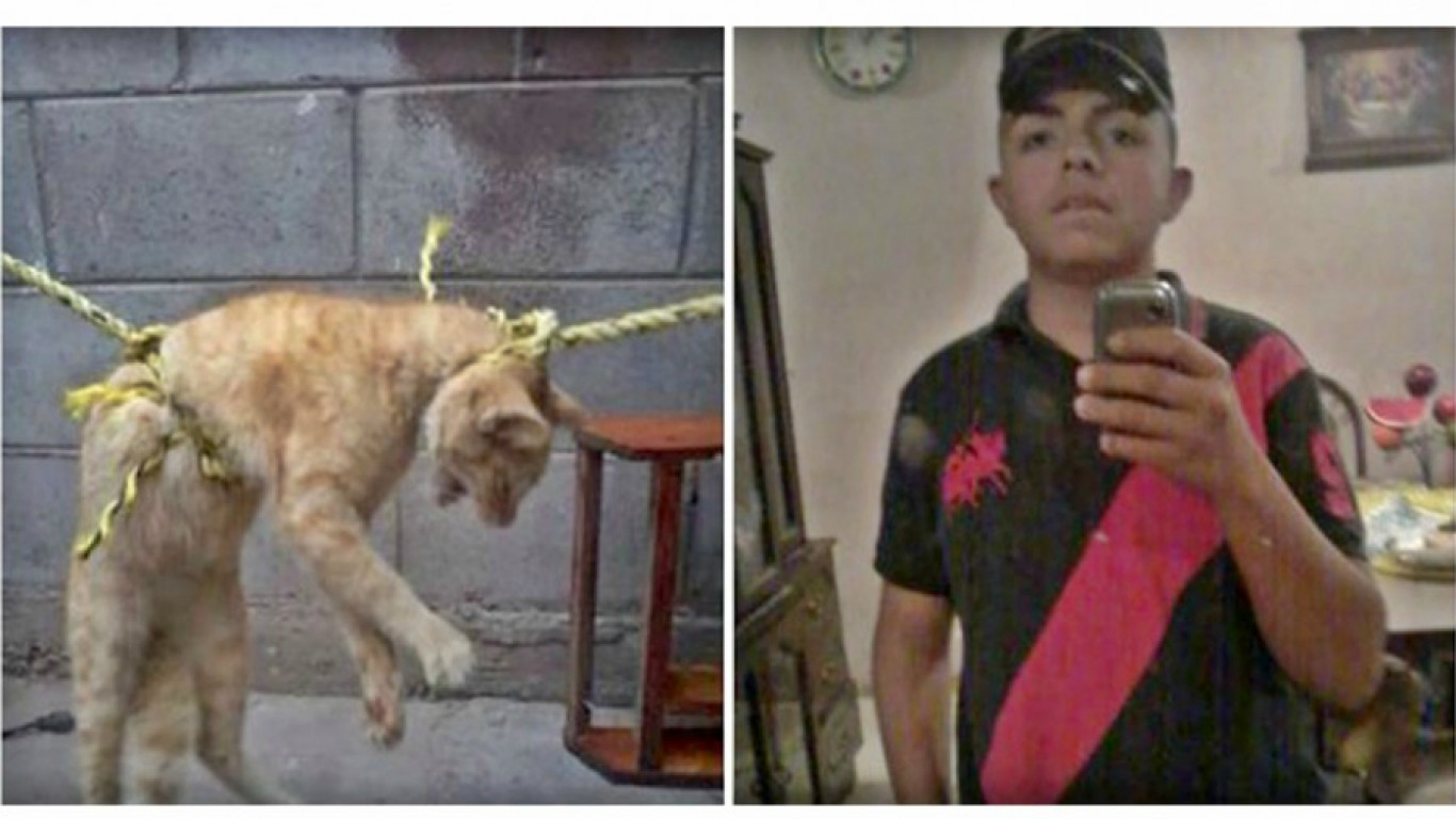Teenager that abused cat for fun gets away with no punishment!