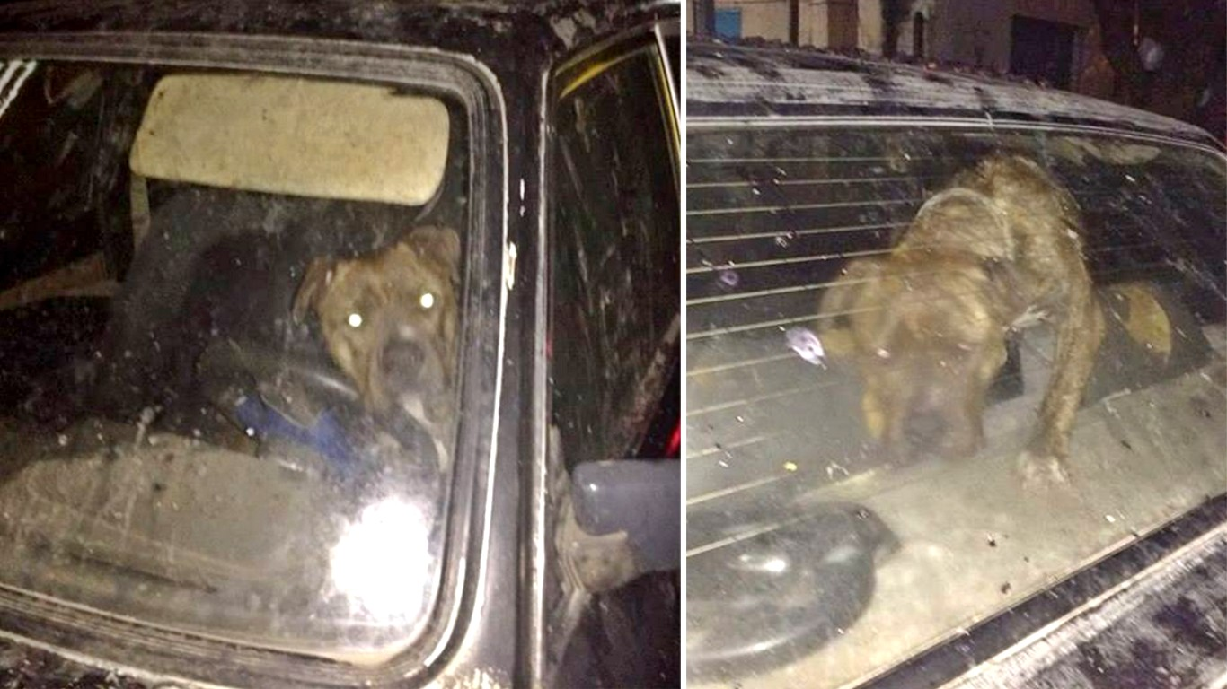 Help rescue dog locked in a car for days without food and water by cruel owner!