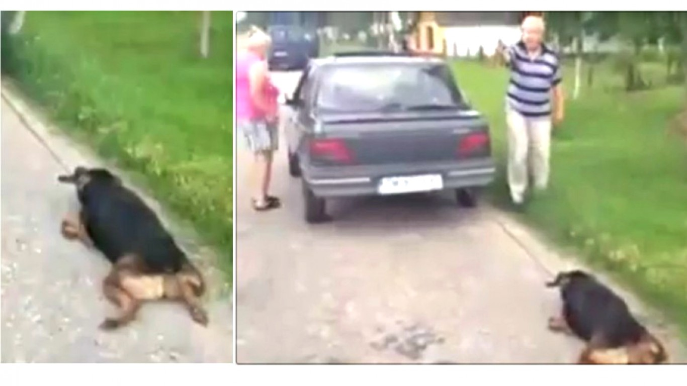 Punish elderly couple that dragged pet dog behind car for miles!