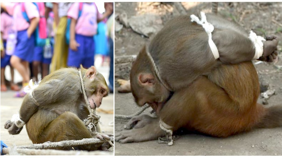 Justice for monkey abused and humiliated in public by laughing people!