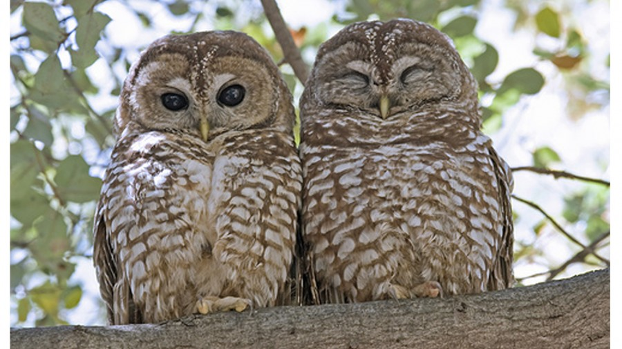 Logging project could endanger the lives of thousands of Northern Spotted Owls! Act Now!