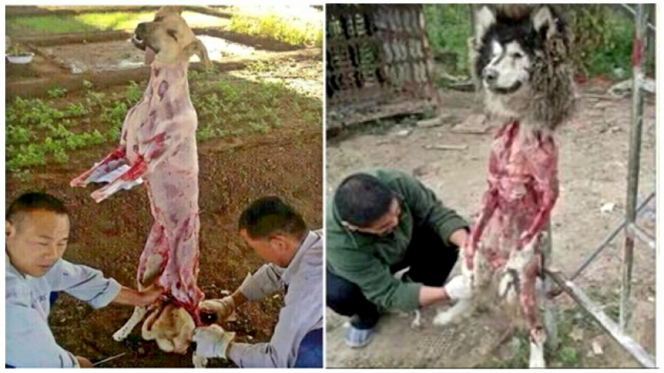 Petition: Help stop the cruel practice of skinning dogs alive in China!