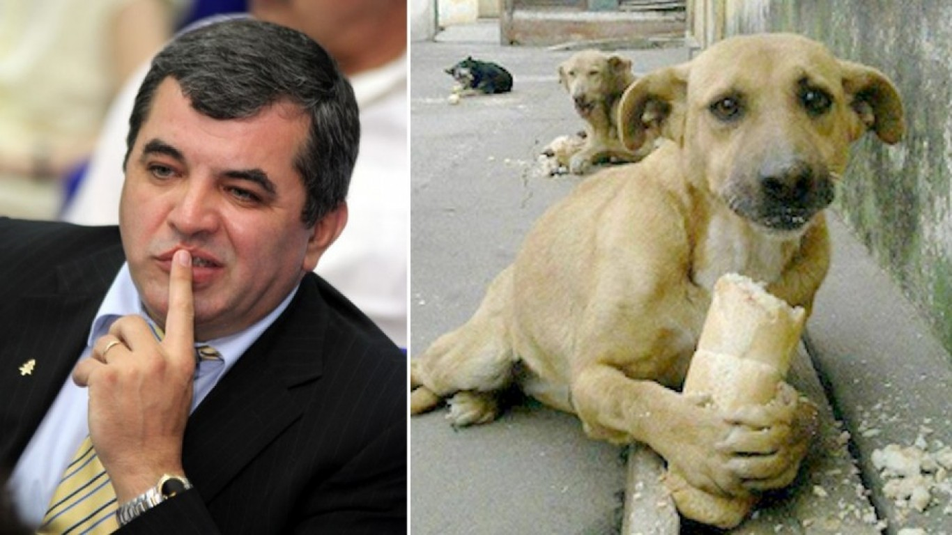 Stop irresponsible politician from imposing $1, 000 fine on feeding stray dogs!