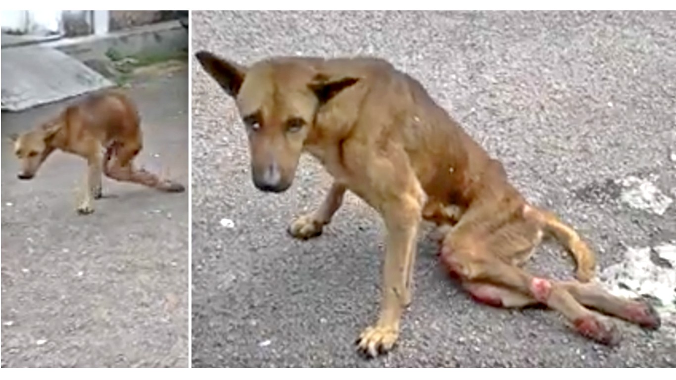 Thousands dogs are left to suffer on the streets! Help save them!